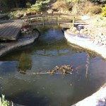 Large koi pond to repair