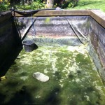 Koi pond emptied to find leaks