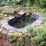Original Wildlife Pond