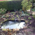 Landscaped wildlife pond