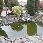 Pond before cleaning